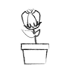 blurred silhouette tulip flower in pot vector image