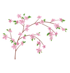 Branch of peach with blooming flowers vector