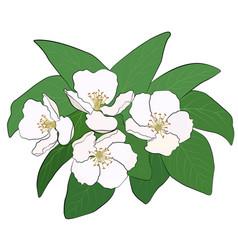 flowering branch of gunce vector image