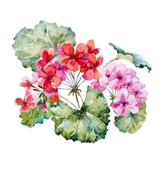 Watercolor geranium composition vector image vector image