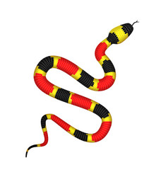 3d of coral snake or micrurus vector