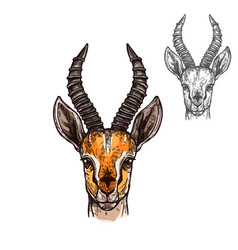 Antelope sketch icon of african wild animal vector