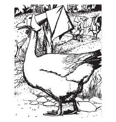 Goose vintage vector