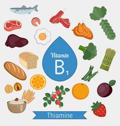 vitamin b1 or thiamin infographic vitamin b1 or vector image