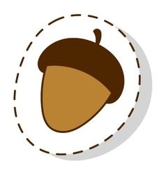 Dried acorns flat vector image