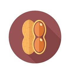 Peanut flat icon vegetable vector