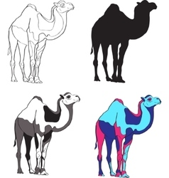 depicting camels made contour vector image vector image