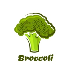Cartoon fresh green healthy broccoli vegetable vector