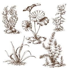 Algae sketch vector