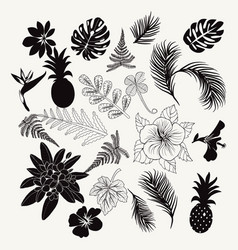 Collection of tropical plants leaves and flowers vector