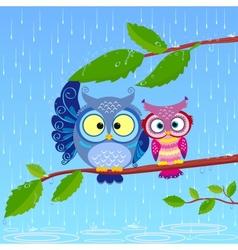 owl rain vector image