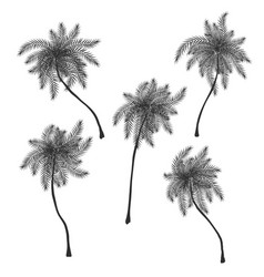 set of stylized palm trees silhouettes vector image