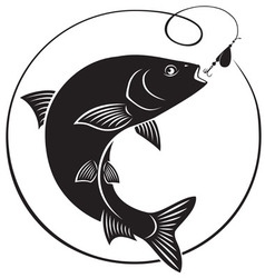 Chub fish vector