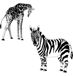 a giraffe and zebra vector image