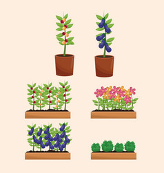 pot plants orchard garden vector image