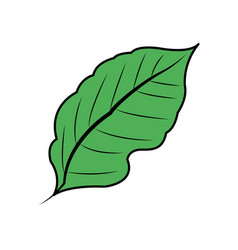 Green leaf icon image vector