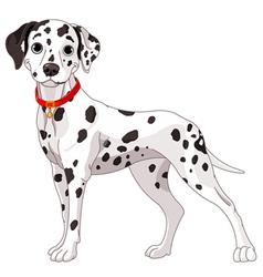 Cute dalmatian dog vector