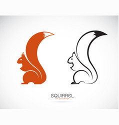 squirrel design on white background mammal vector image