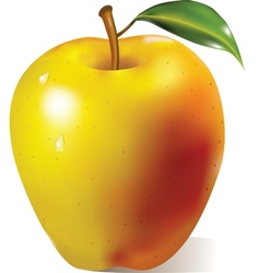Yellow apple with green leaf vector image
