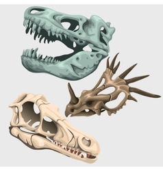 Three skulls of ancient large animals vector