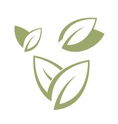 Bay leaf vector image