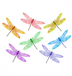 multicolored dragonflies vector image