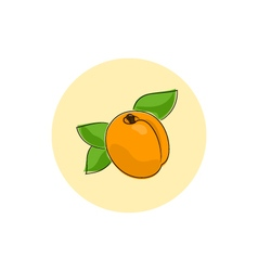 Icon Colorful Apricot vector image vector image