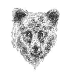 sketching of bear vector image