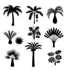 Tropical palm trees set exotic tropical plants vector