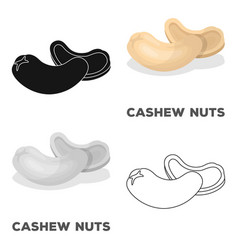 cashew nutsdifferent kinds of nuts single icon in vector image