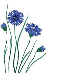 Beautiful blue cornflower isolated on white vector