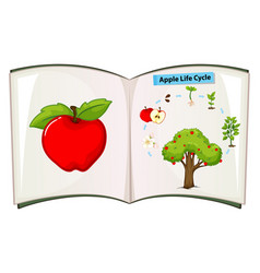 book of apple life cycle vector image vector image