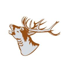 Stag deer roaring vector
