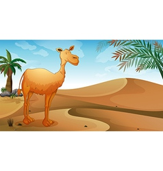 A desert with a lonely camel vector