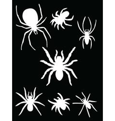 White spider vector