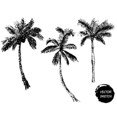 Palm Tree Sketch A vector image