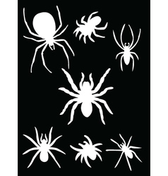 White spider vector
