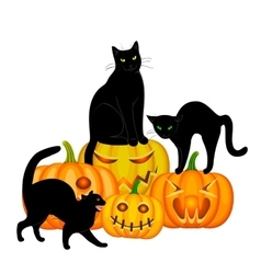 Cats and pumpkin vector