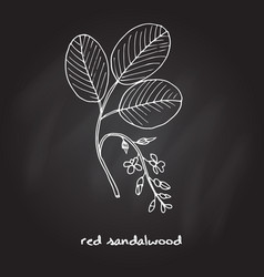 Red sandalwood branch vector