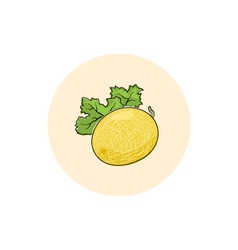 Icon colorful melon vector