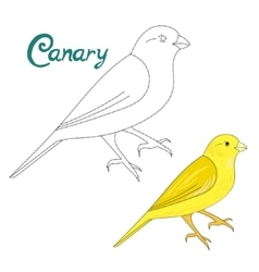 Educational game connect dots to draw canary bird vector