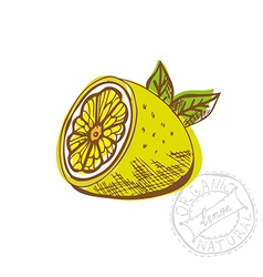 Hand drawn lemon fruit vector