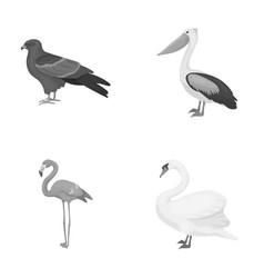 Kite pelican flamingo swan birds set vector