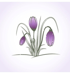 Easter beautiful crocus in snow and ice closeup vector