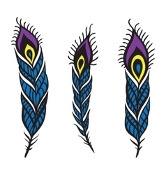 Peacock Feather set vector image