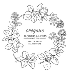oregano set vector image