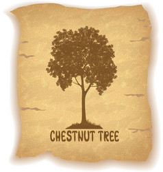 Chestnut tree on old paper vector