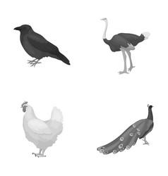 Crow ostrich chicken peacock birds set vector