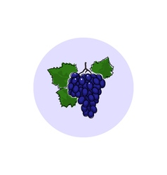 Icon colorful grapes vector