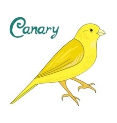 Bird canary vector